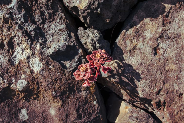 Flowers nested between rocks in the evening light