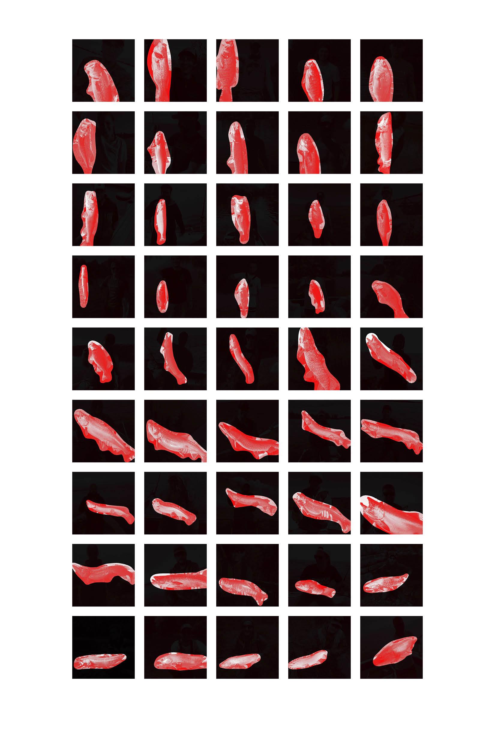 Fish-Grid.jpg