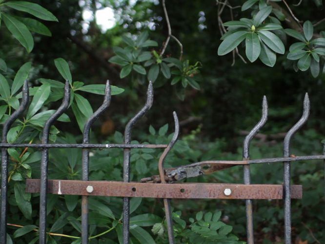 Broken iron fence in some greenery