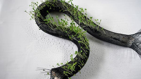 Black gauze tube with grass growing out of it