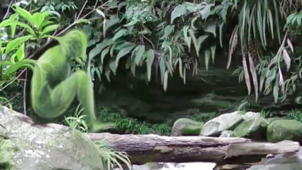A green illustrated figure superimposed onto a rainforest scene