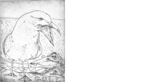 An illustration of a gull