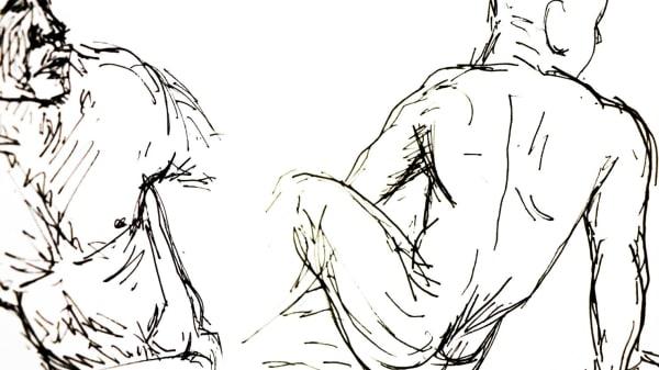 ANATOMvQWM Anatomical Drawing - Intermediate