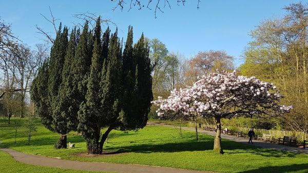 An open park
