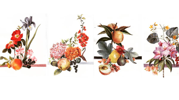 6 paintings of flowers and fruit by Nicola Pasterfield.