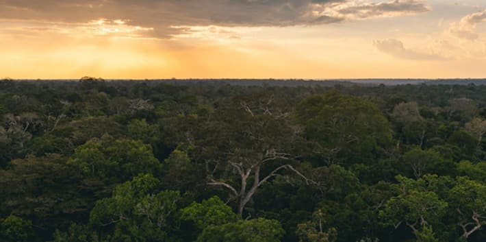 Photo of the Amazon Rainforest in Brazil at sunset