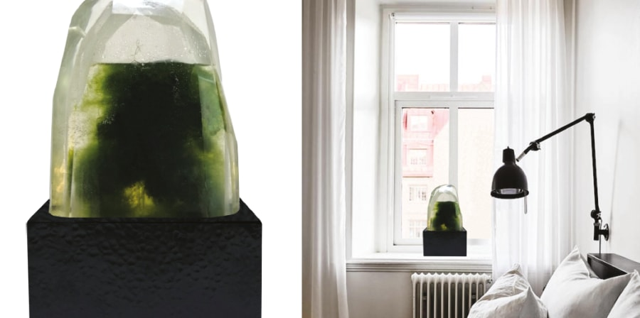 Image of Sarah Graham's algae air purification