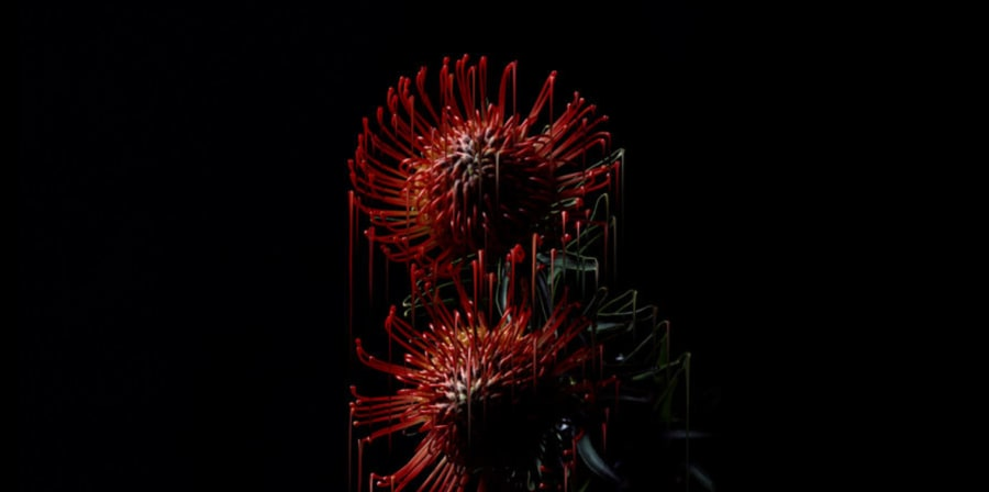 micro image of red flowe on black background