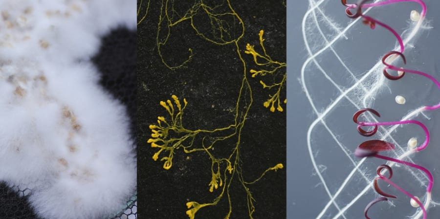 Abstract collage of fabrics