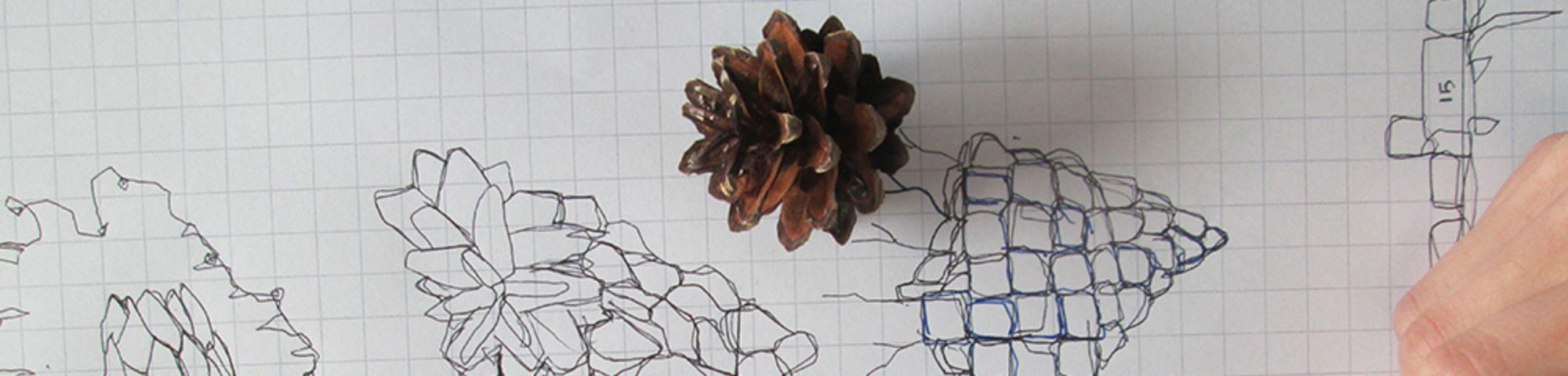 Embedding maths in art pine cone image