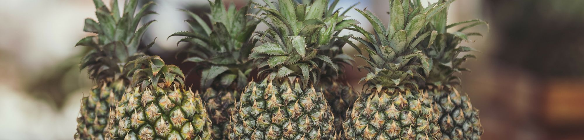 A lineup of pineapples. Pineapple leaf fibre can be used as a new natural material.
