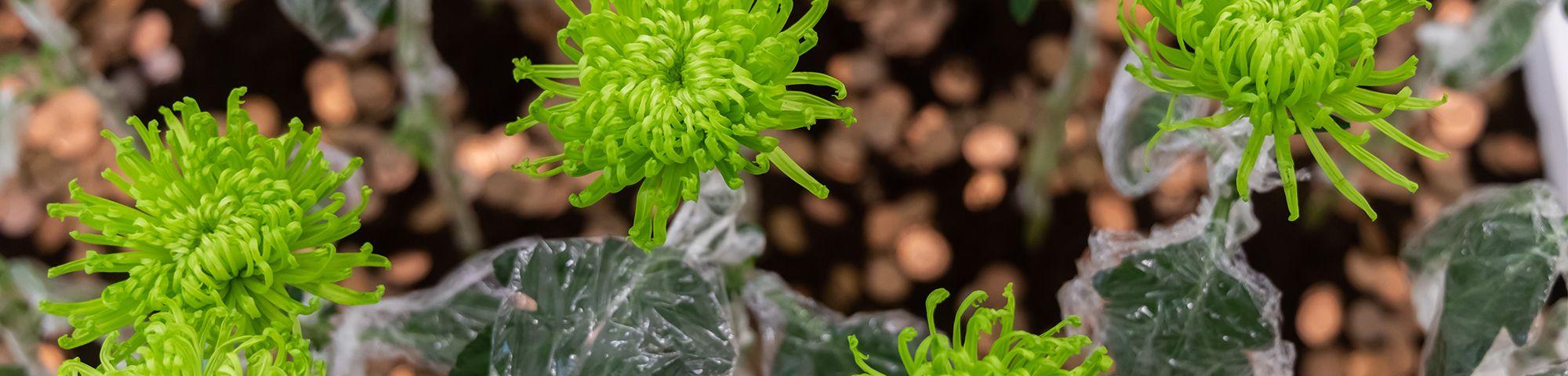 Close up shot of green plants