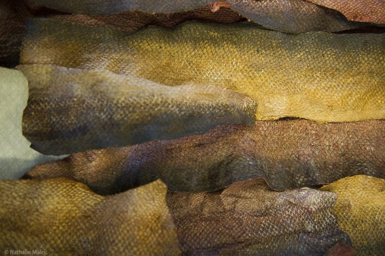 fish skin close up