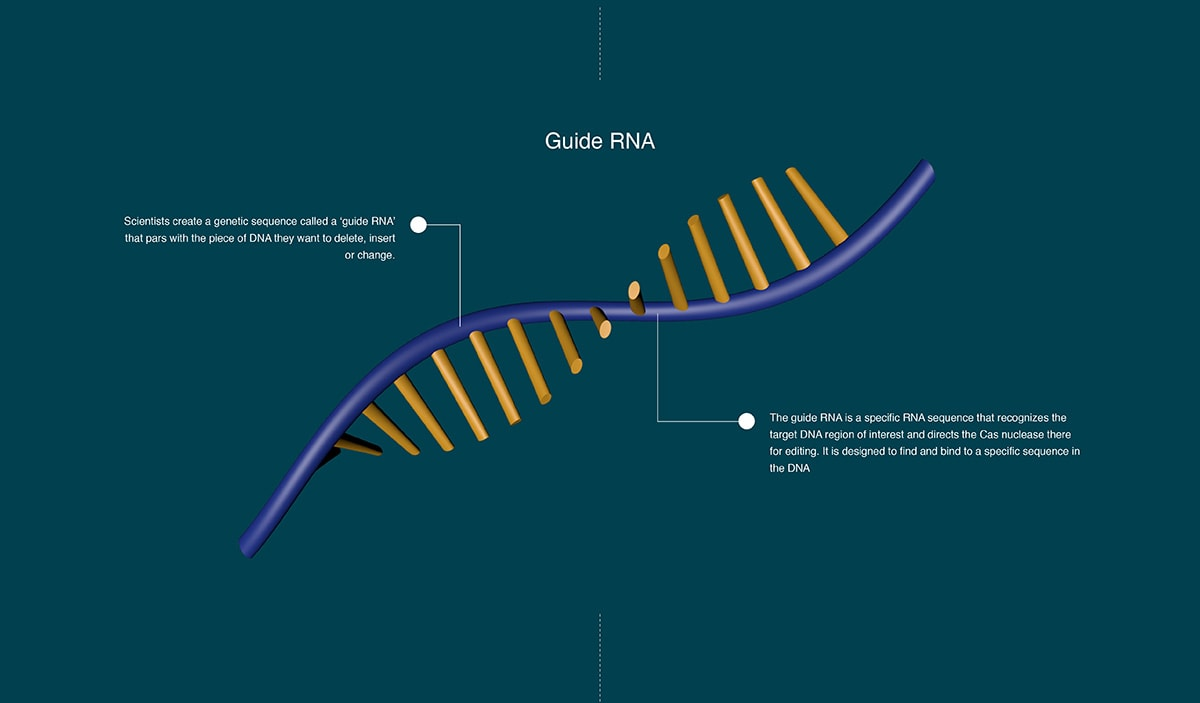 Cliff-RNA.jpg