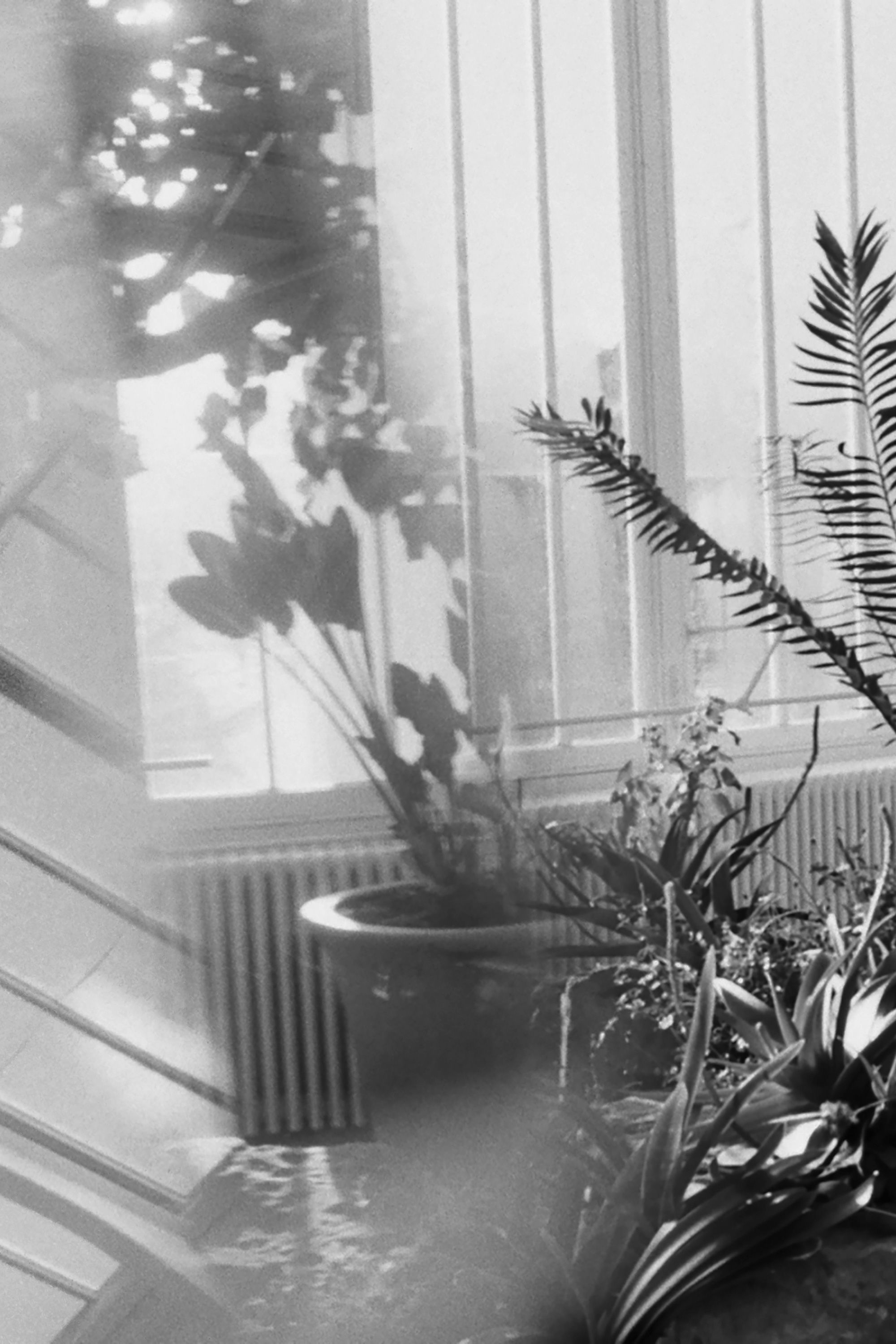 black and white photgraphic image, a house plant
