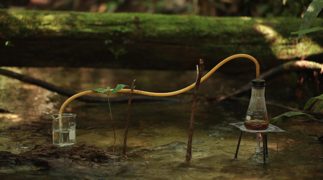 Jungle Experiments in the Amazon