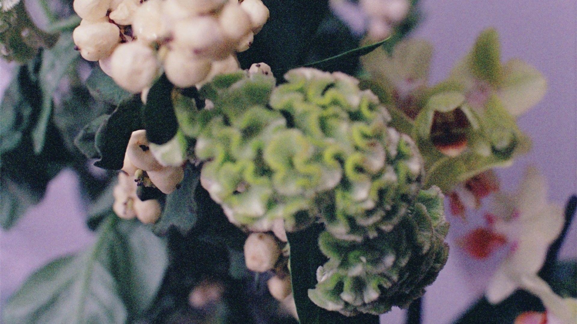 grainy image of plants against a purple backdrop