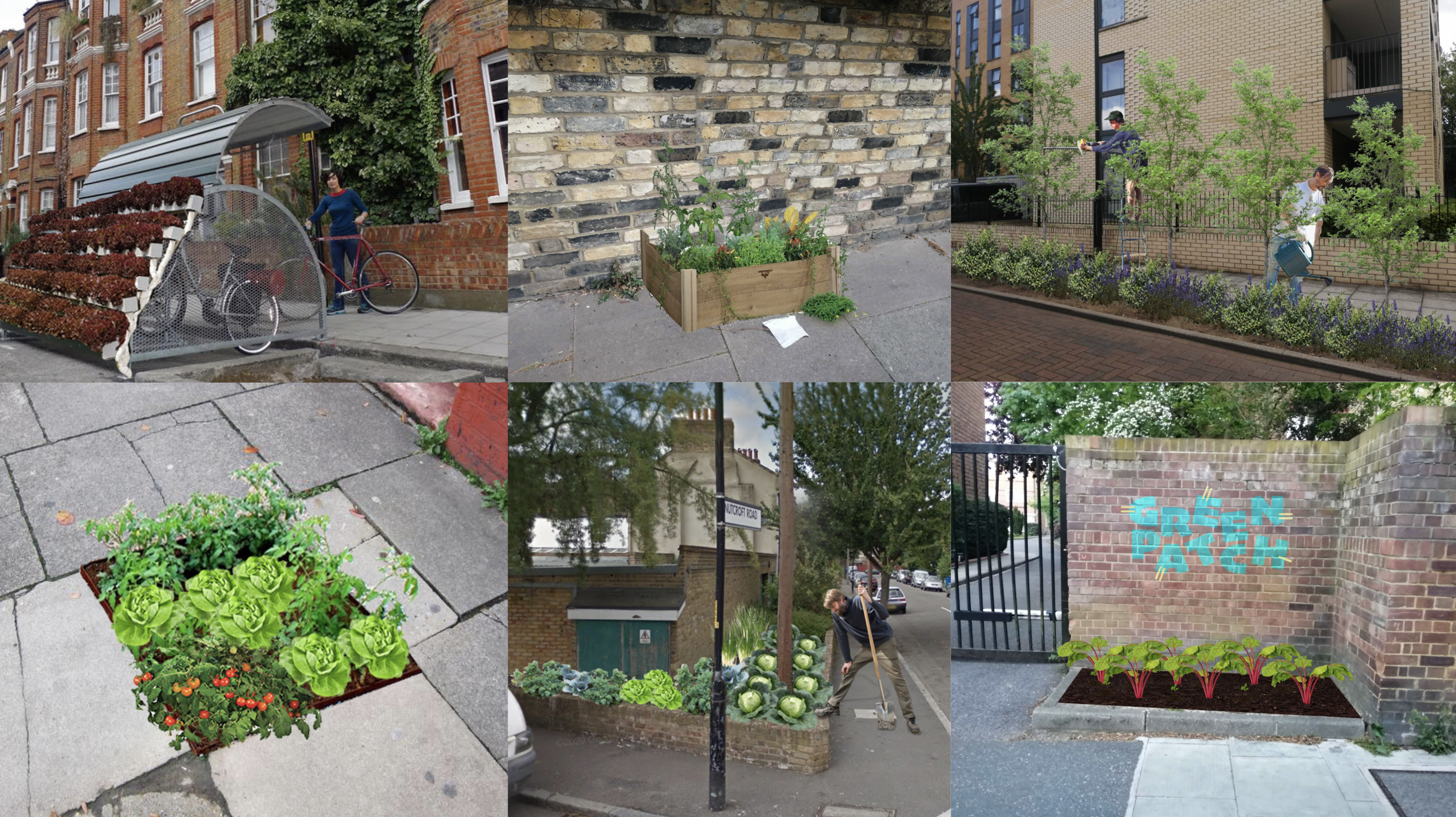 images of london planting areas with iullustrations of plants overlaid