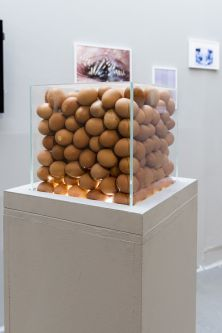 A plinth with a perspex box on top, filled with eggs.