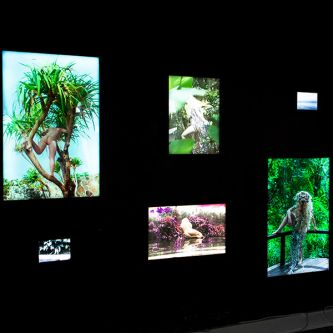 Installation view of photography light-boxes in a gallery space.