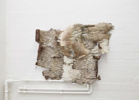 Work by Liza Mackintosh using Ash tree bark.