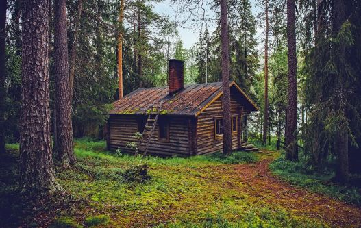 Image depicts a cottage in the woods.