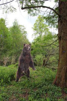 Bear cutout in woods