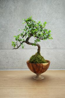 Bonsai tree displayed in a unique, recycled pot by the design brand Memories of Green