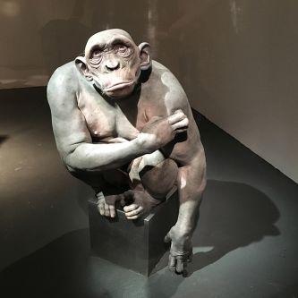 Chimpanzee model.