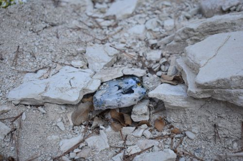 gem in dusty ground