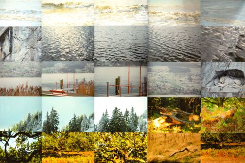 A large photographic piece made up of 16 square photos - al showing trees and water.