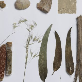 Photograph of dried leaves and foliage