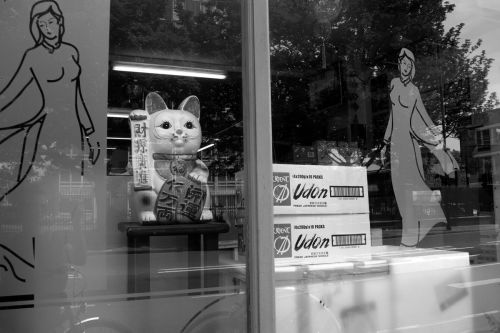 Japanese lucky cat in a shop window