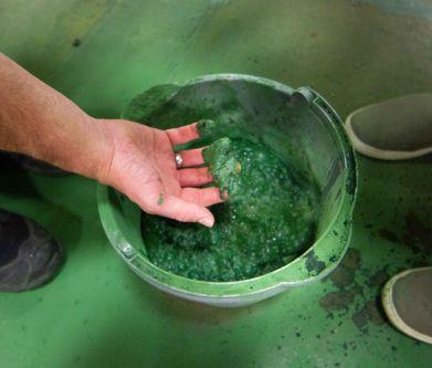 Foam algae