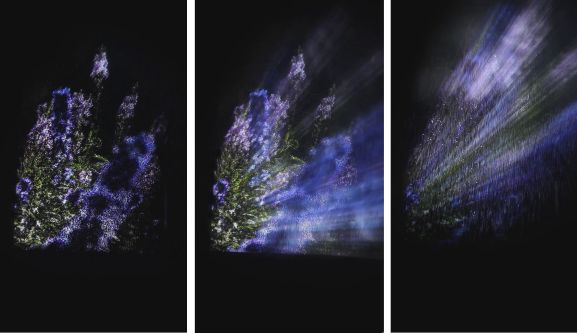 Triptych of light diffraction images