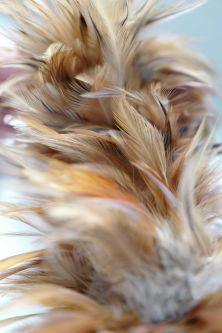Bundle of feathers