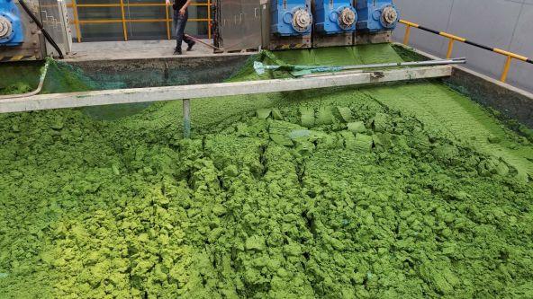 Algae in waterway