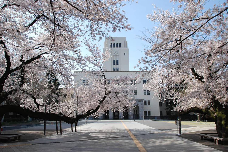 Central Saint Martins x Tokyo Tech: Ulrike Oberlack