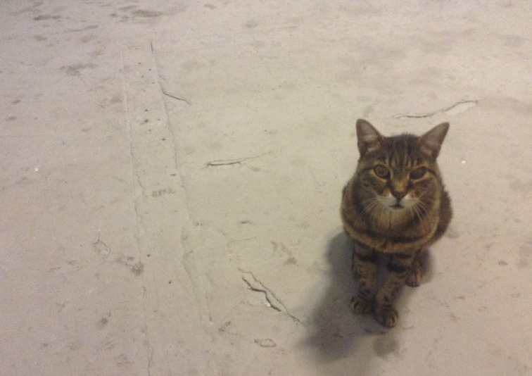 photo of a tabby cat from above on white floor