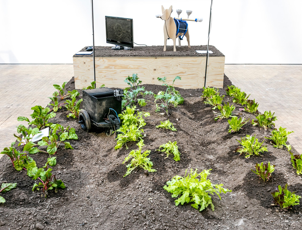 Photo of installation with soil and lettuces planted in rows