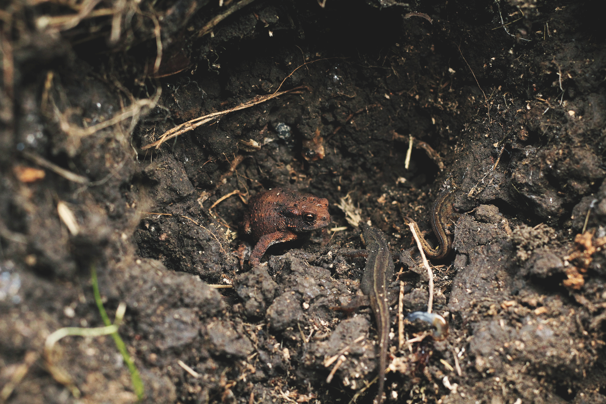 Undergrowth - Call for collaborators - Image of a frog in a damp forest